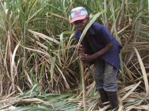 cortador de caña de azucar en republica dominicana