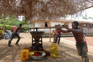 Producción de aceite de palma utilizando maquinaria tradicional en Camerún.