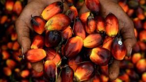 ¿Qué pasa con las grandes plantaciones de aceite de palma en África?