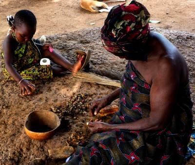 El aceite de palma en África: de plantaciones familiares a grandes corporaciones