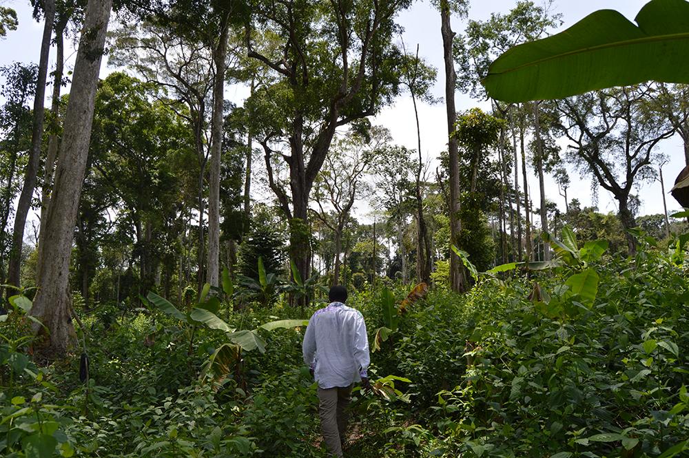 Primeras impresiones desde Camerún